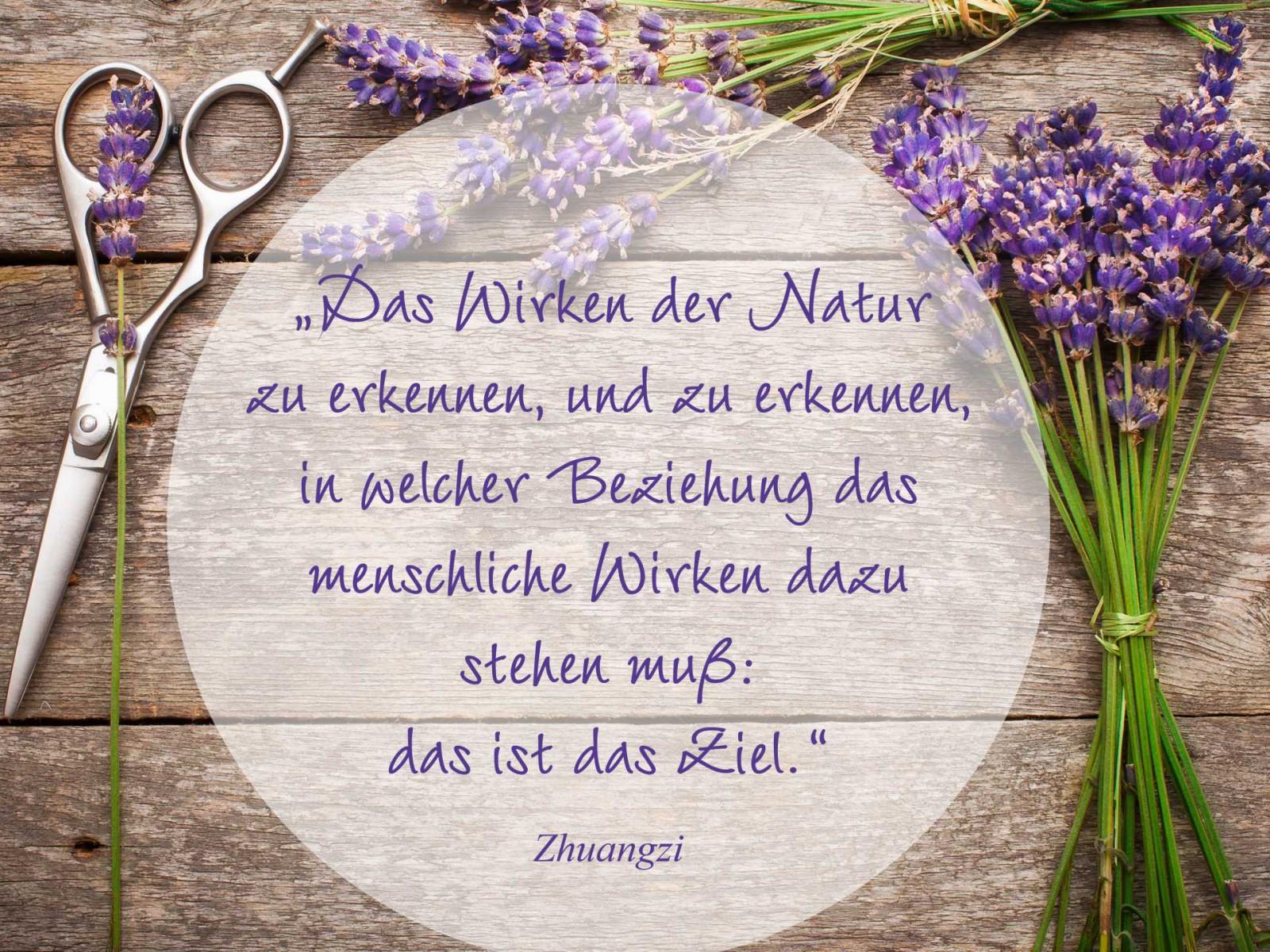 zitat naturalis_text höher